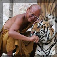 Moine au tigre 1