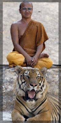 Moine au tigre 2